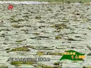 綠色環保 生態南昌 2017-09-17
