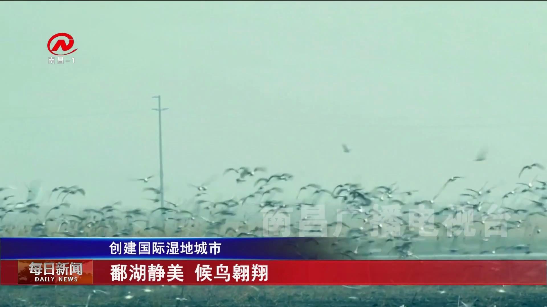 鄱湖靜美 候鳥翱翔