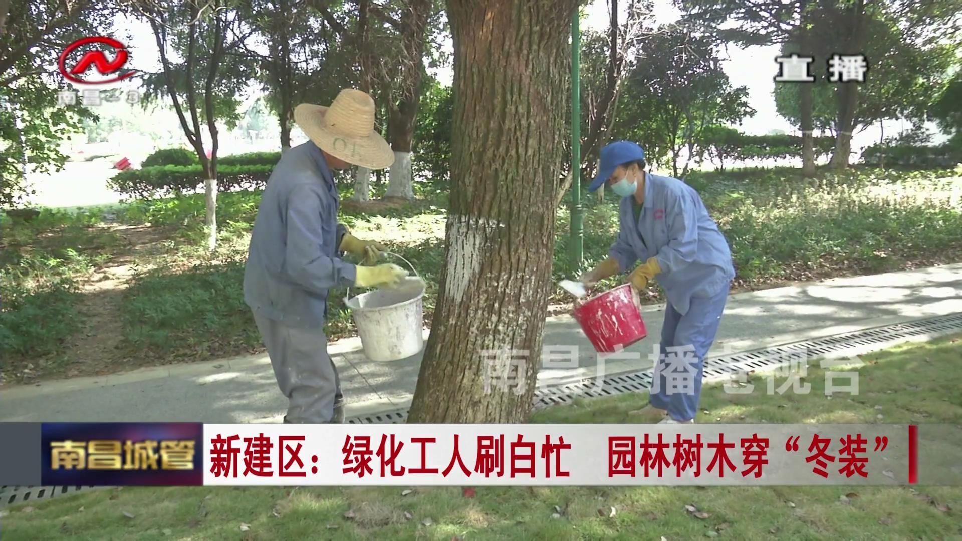 """【城管新闻】新建区:绿化工人刷白忙  园林树木穿""""冬装"""""""