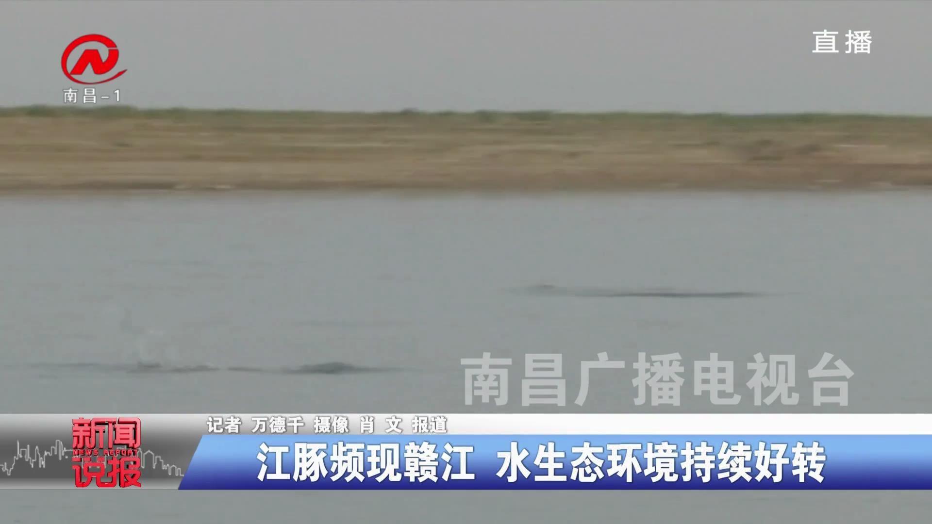 江豚频现赣江 水生态环境持续好转