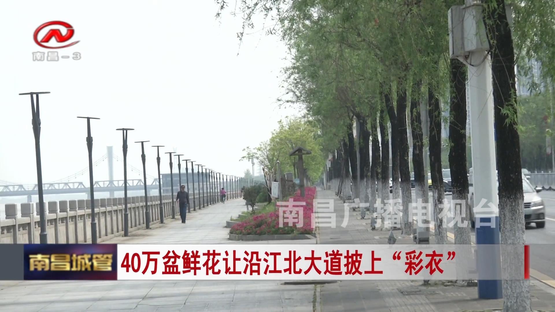 """40万盆鲜花让沿江北大道披上""""彩衣"""""""