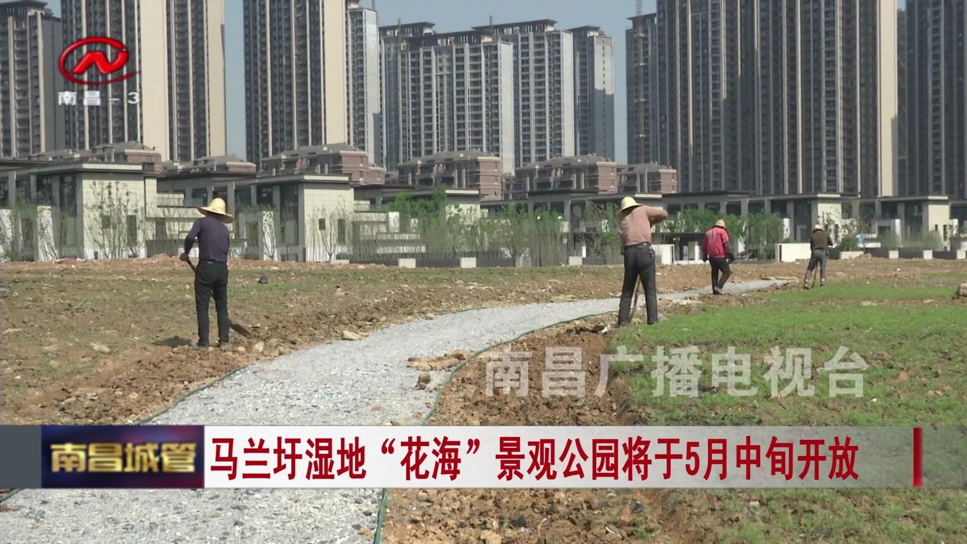 """马兰圩湿地""""花海""""景观公园将于5月中旬开放"""