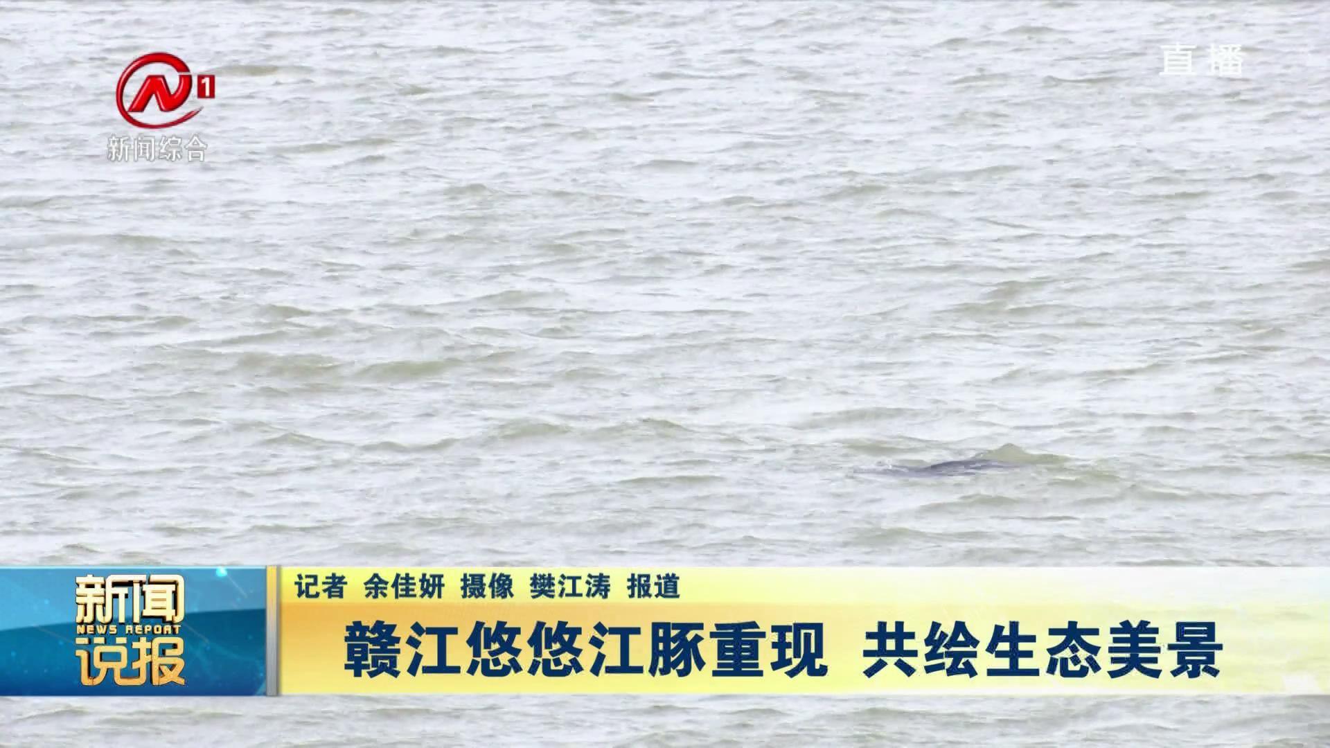 赣江悠悠江豚重现 共绘生态美景