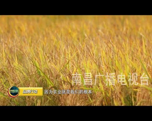 江西品牌報道 2019-11-20
