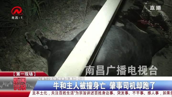 牛和主人被撞身亡 肇事司机却跑了