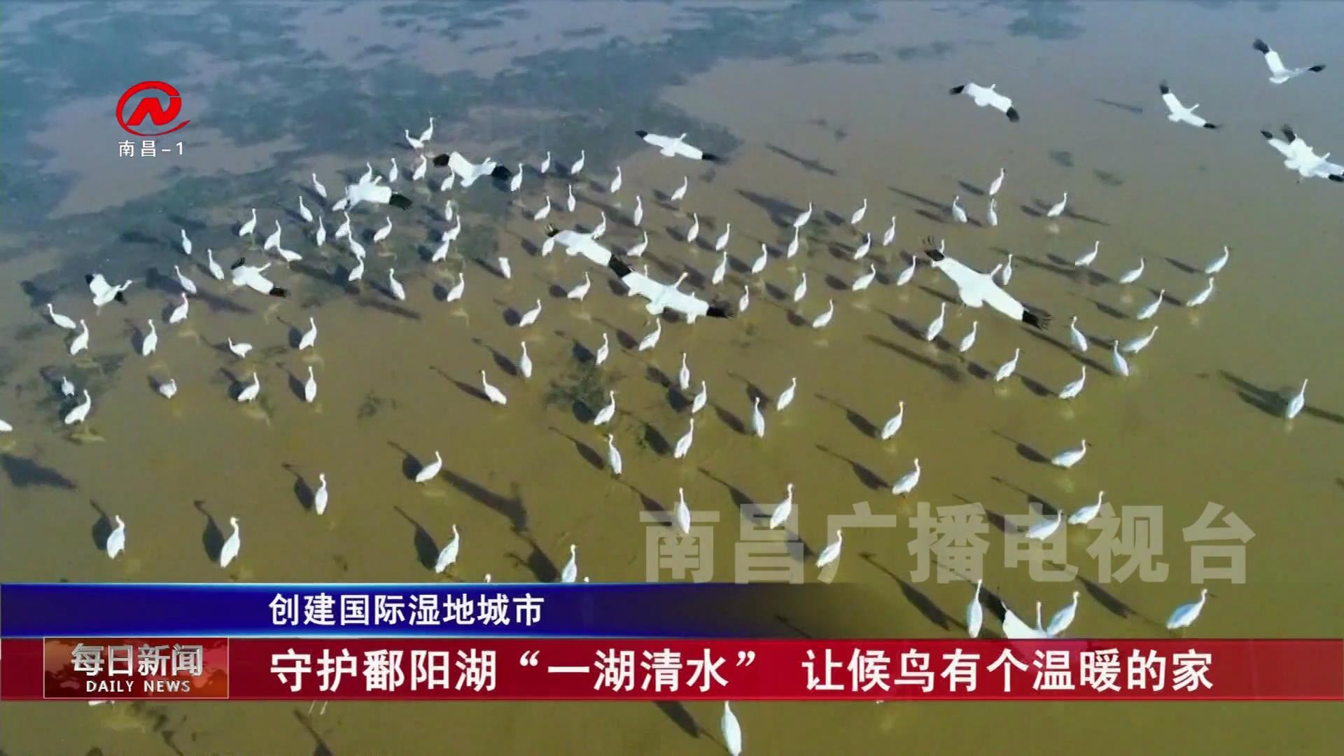 """守护鄱阳湖""""一湖清水""""  让候鸟有个温暖的家"""