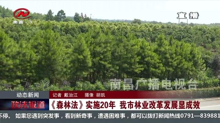 《森林法》實施20年 我市林業改革發展顯成效