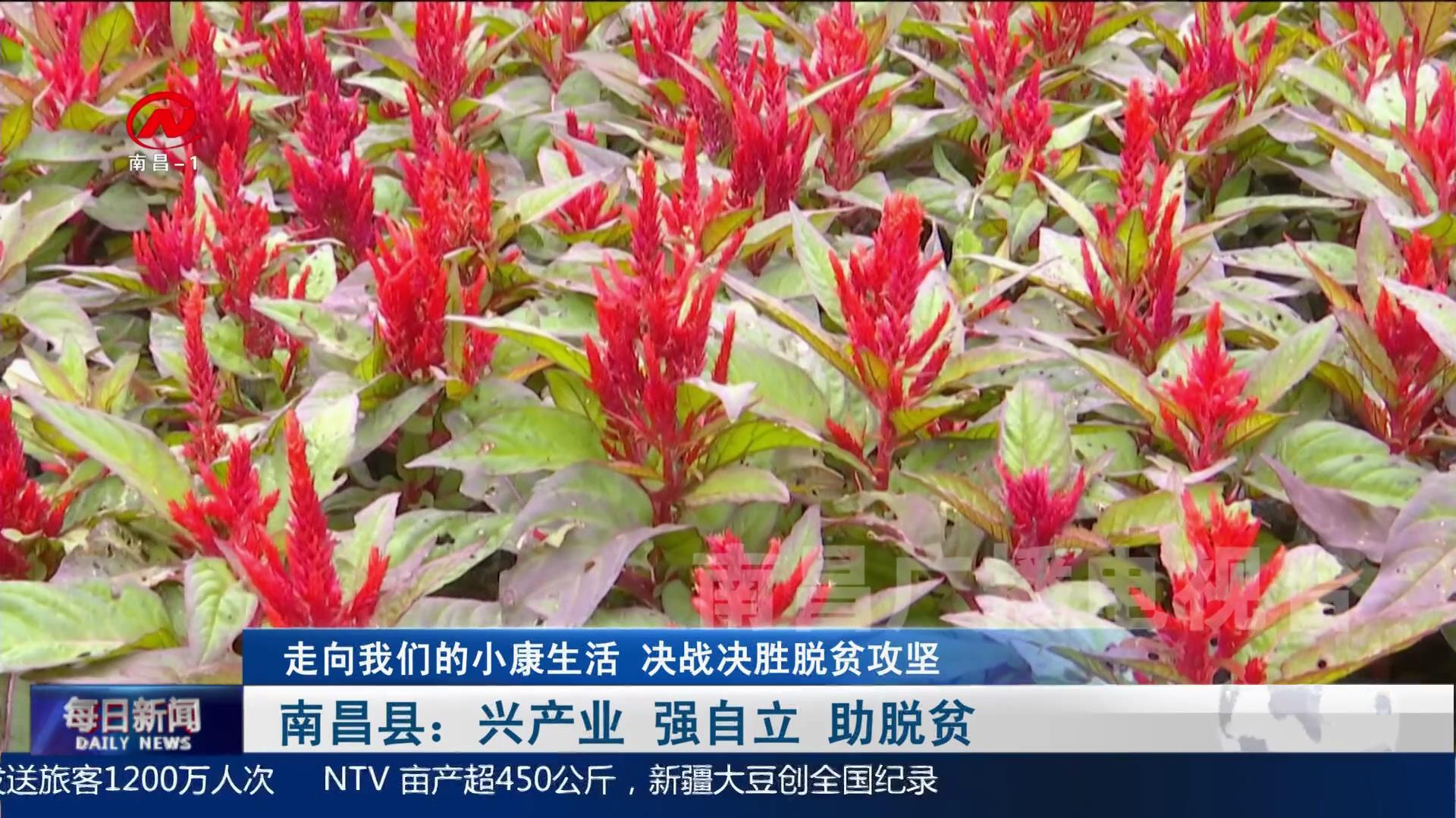南昌县:兴产业  强自立 助脱贫