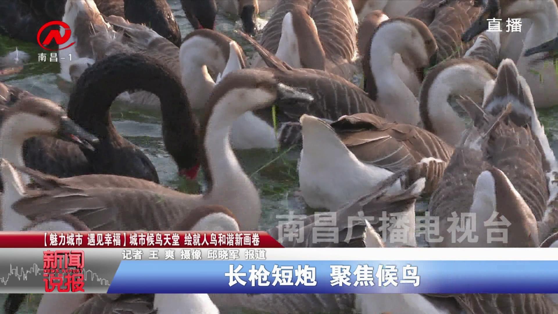 【魅力城市 遇见幸福】城市候鸟天堂 绘就人鸟和谐新画卷