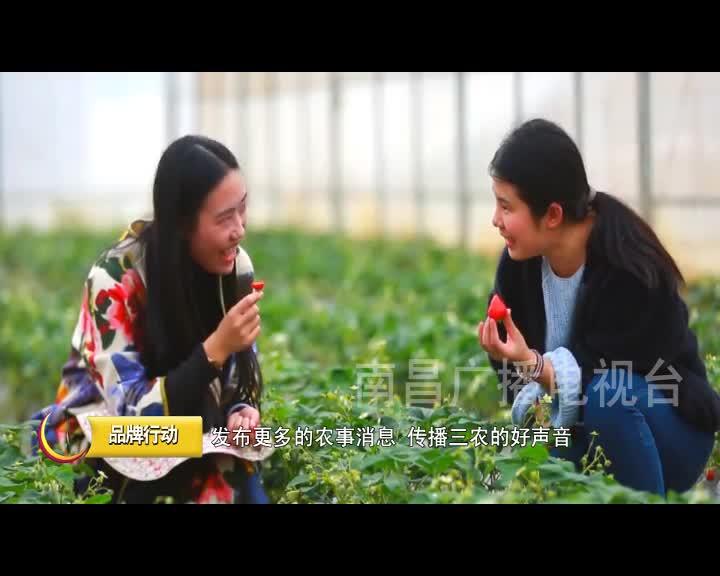 南昌广播电视台公共·农业频道正式开播