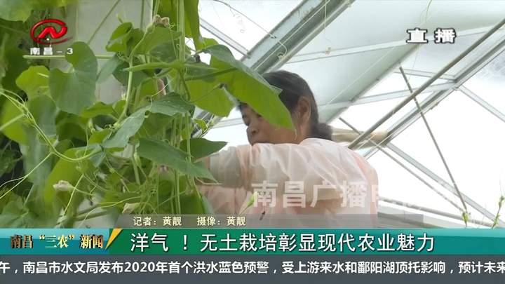 """【南昌""""三农""""新闻】洋气 !无土栽培彰显现代农业魅力"""