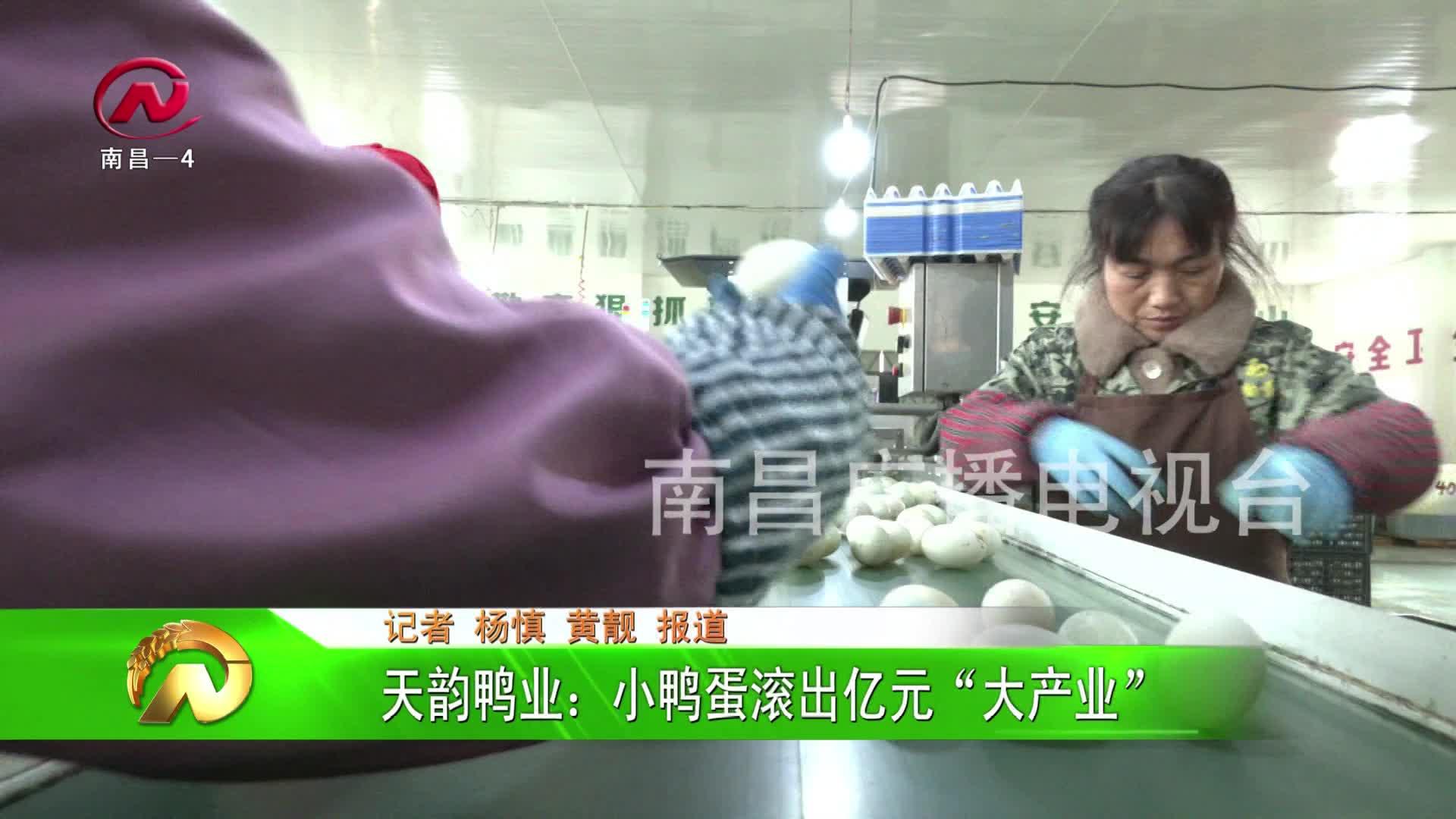"""【豫章农视】天韵鸭业:小鸭蛋滚出亿元""""大产业"""""""