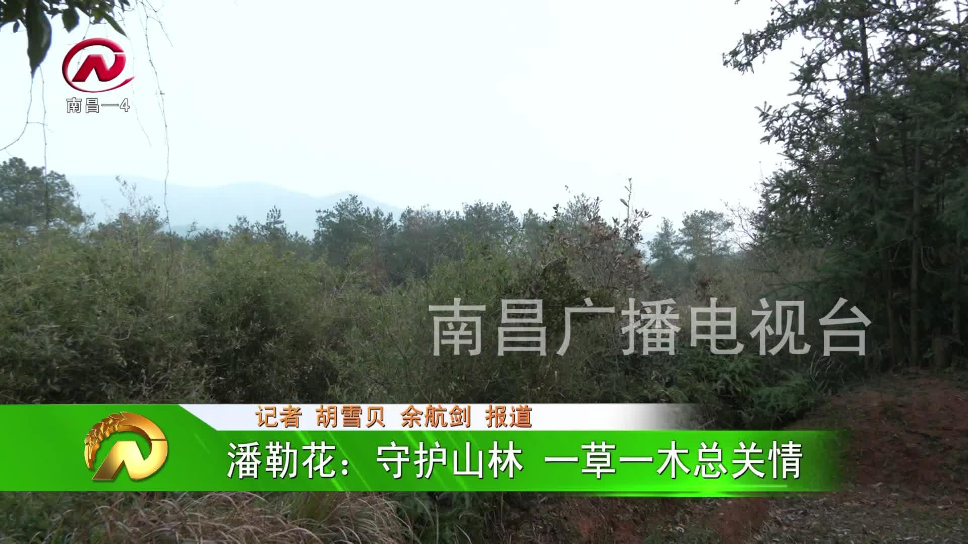 【豫章农视】潘勒花:守护山林 一草一木总关情