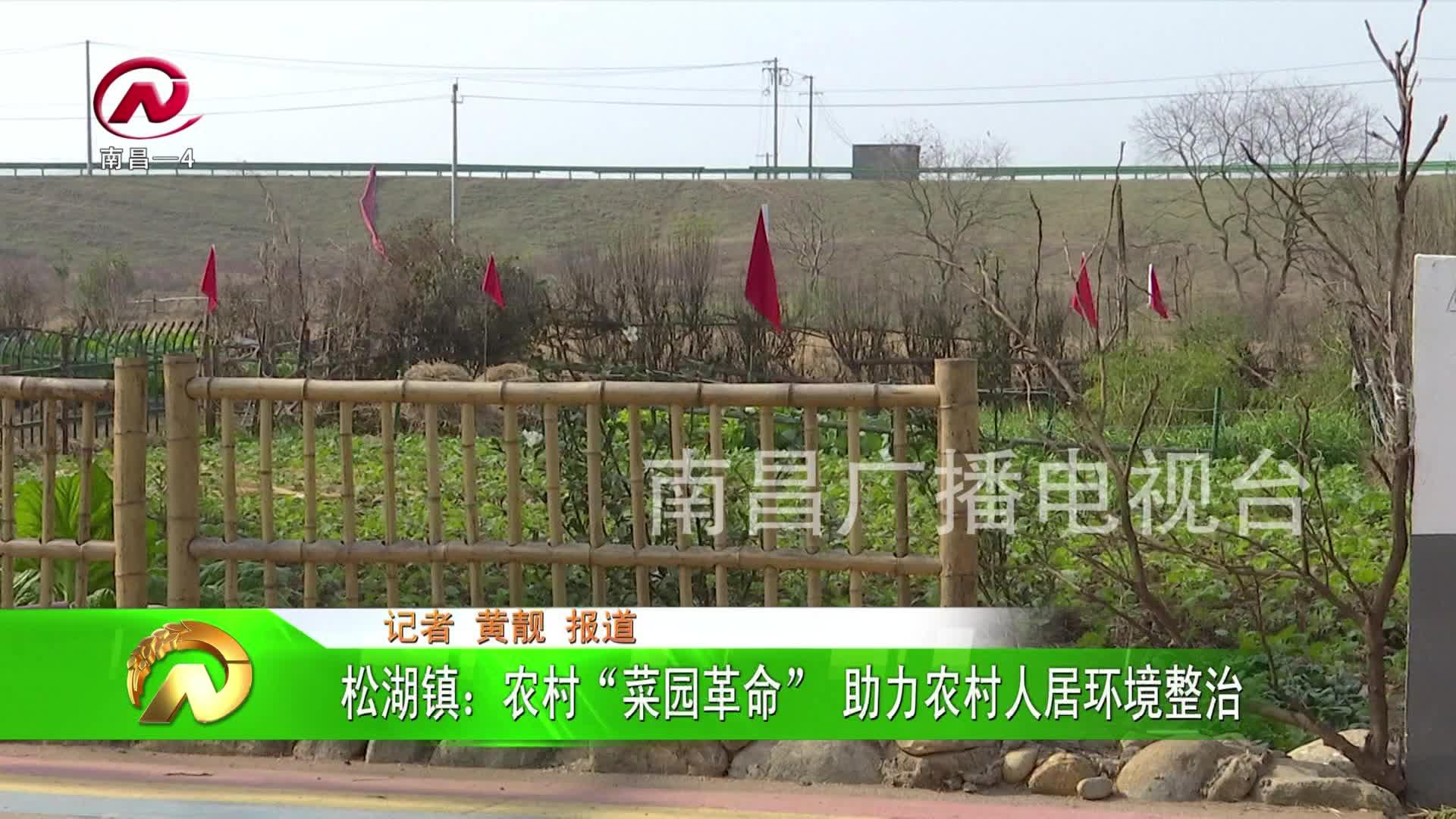 """【豫章农视】松湖镇:农村""""菜园革命"""" 助力农村人居环境整治"""