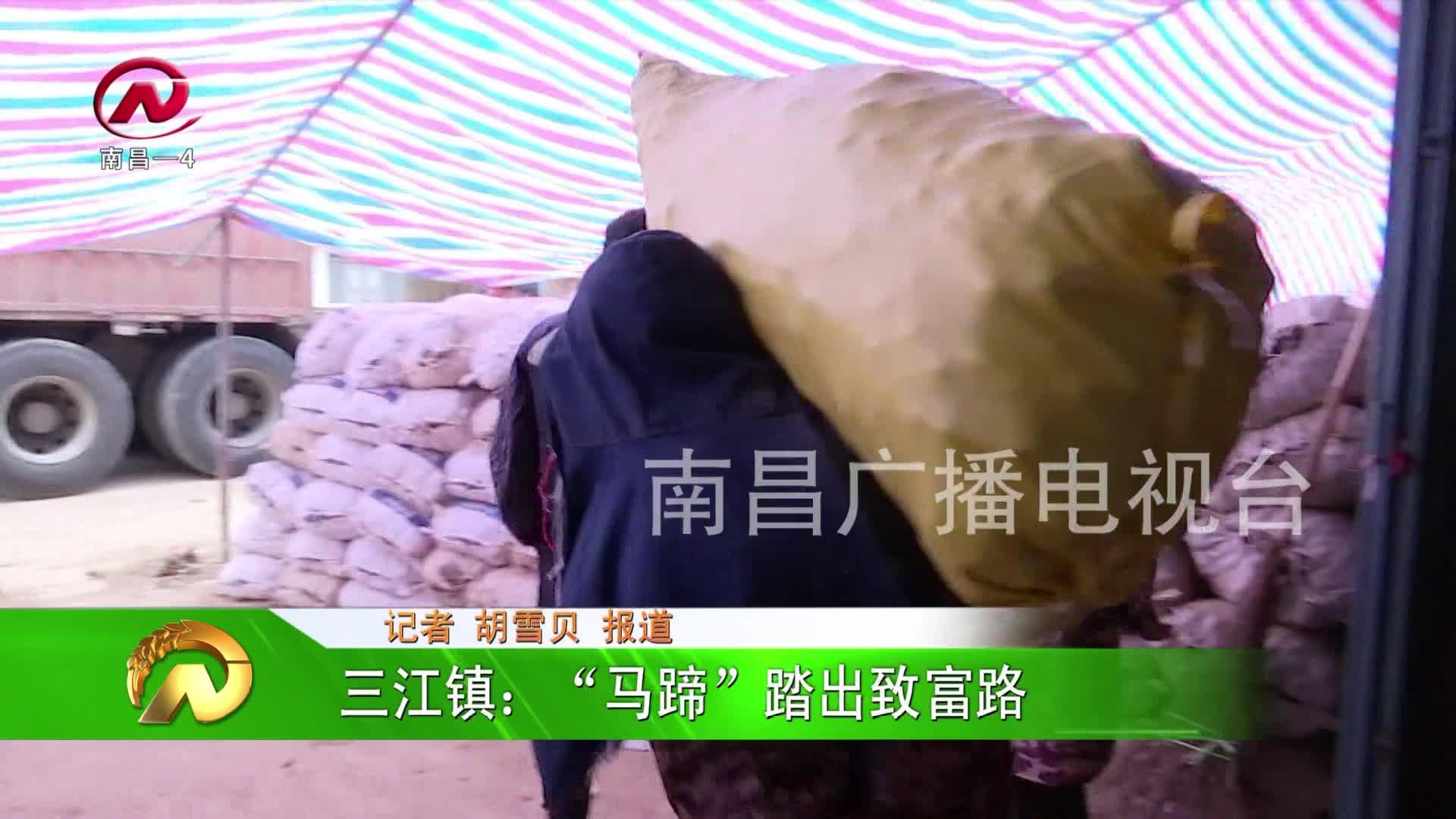 """【豫章农视】三江镇:""""马蹄""""踏出致富路"""