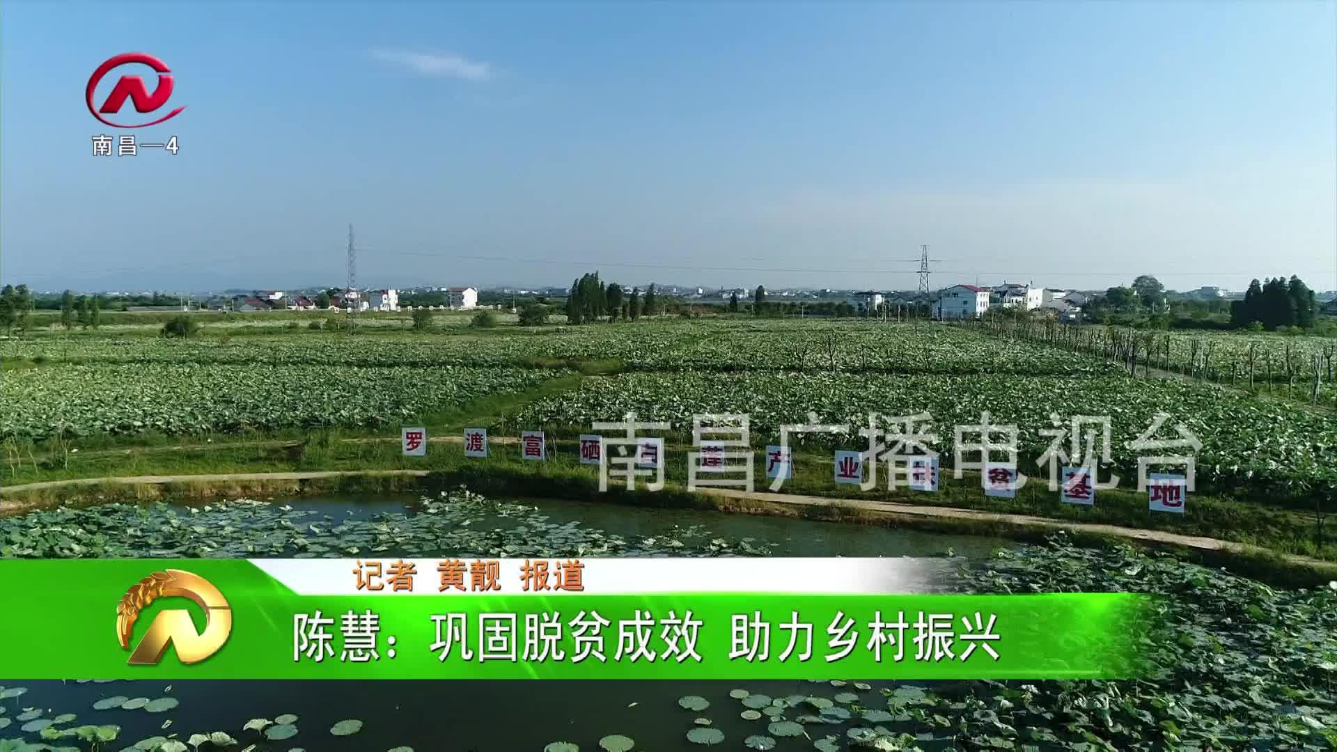 【豫章農視】陳慧:鞏固脫貧成效 助力鄉村振興