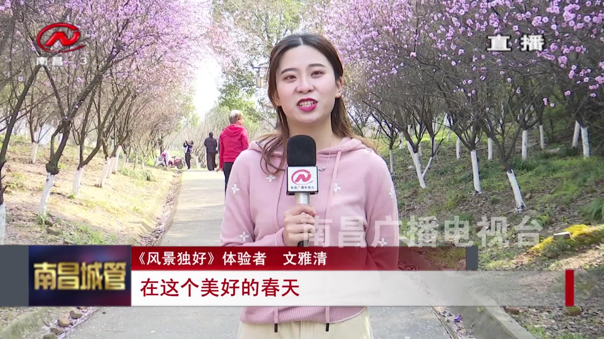 【城管新聞】迎春季 賞梅時