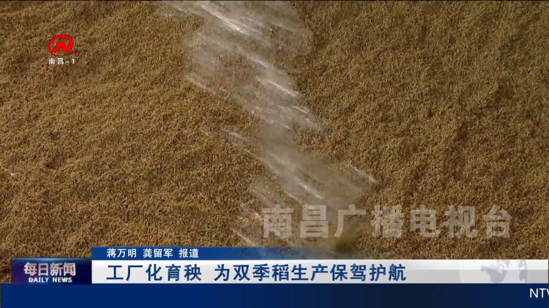 工廠化育秧 為雙季稻生產保駕護航