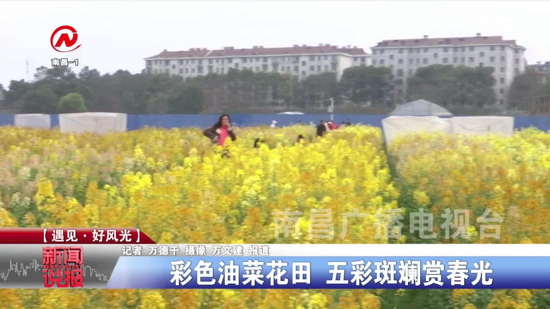 彩色油菜花田 五彩斑斓赏春光