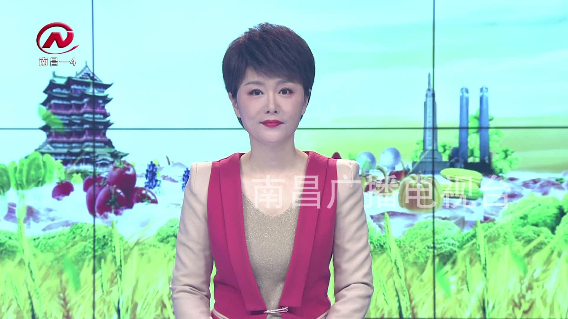 【豫章農視】灣里:明前茶飄香 春日采茶忙
