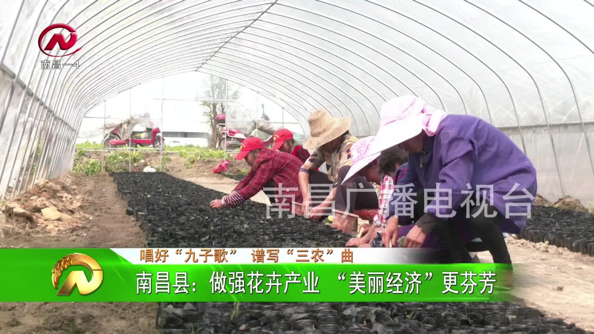 """【豫章農視】南昌縣:做強花卉產業 """"美麗經濟""""更芬芳"""