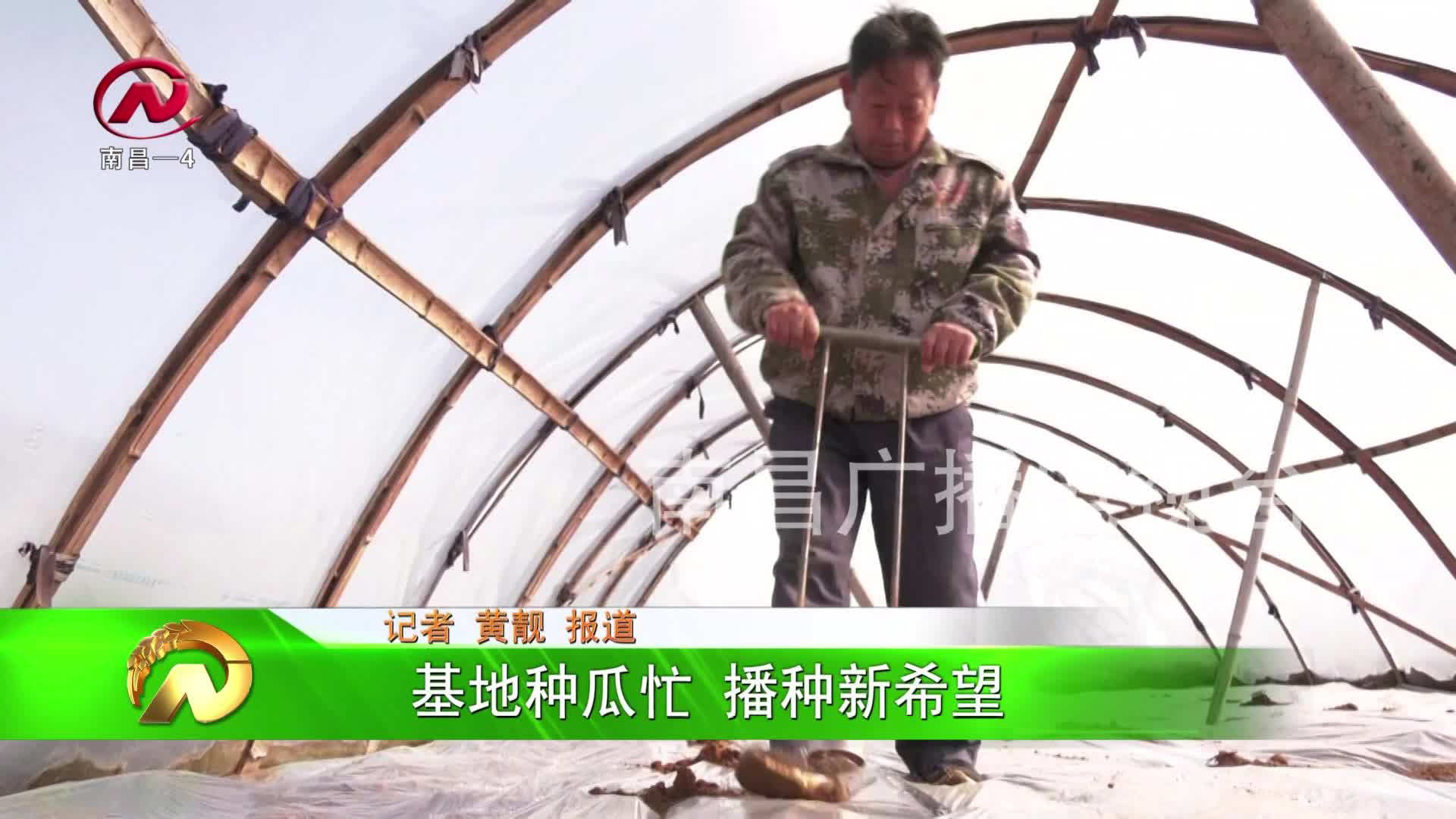 【豫章农视】进贤县:基地种瓜忙 播种新希望