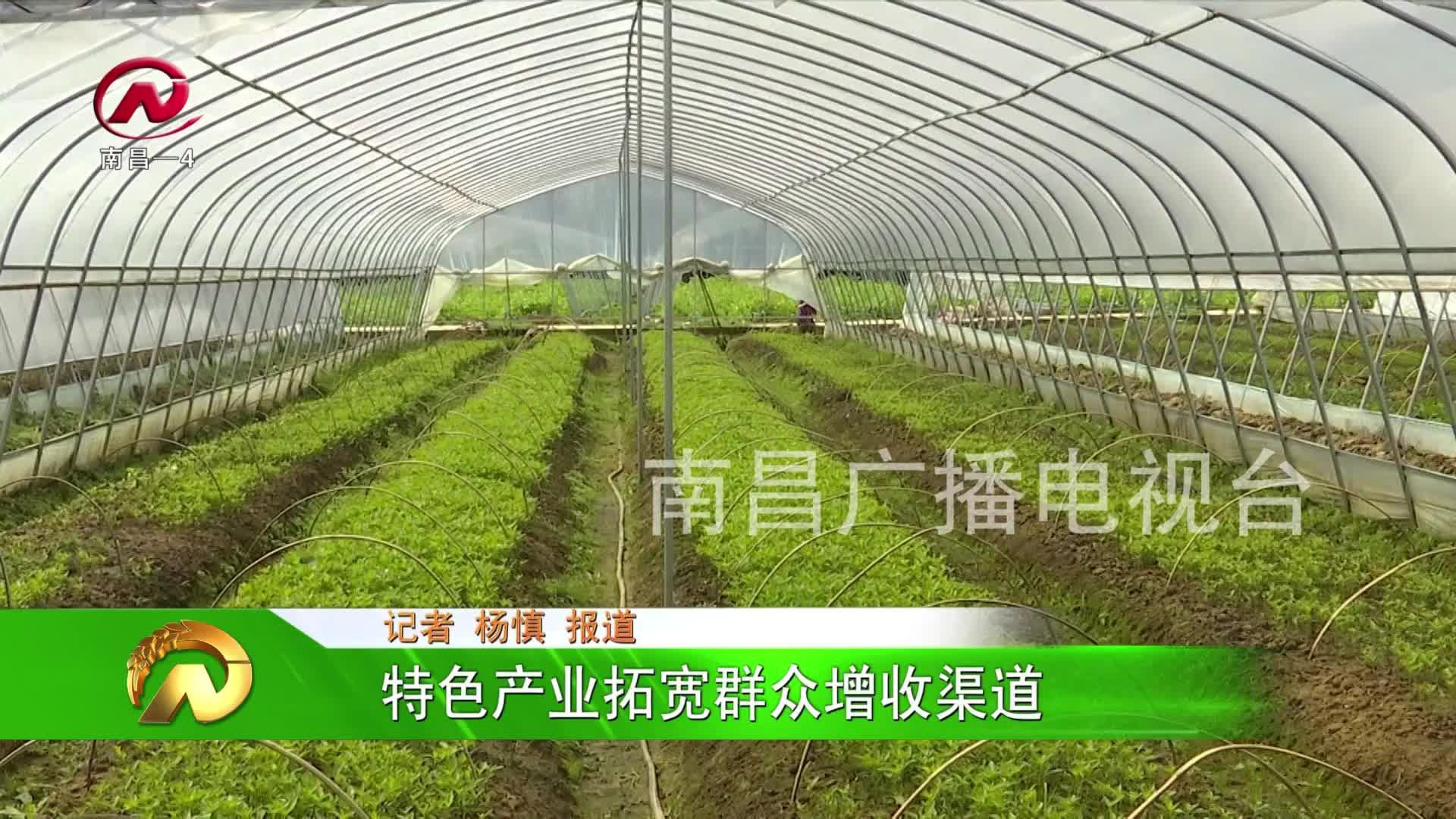 【豫章農視】特色產業拓寬群眾增收渠道