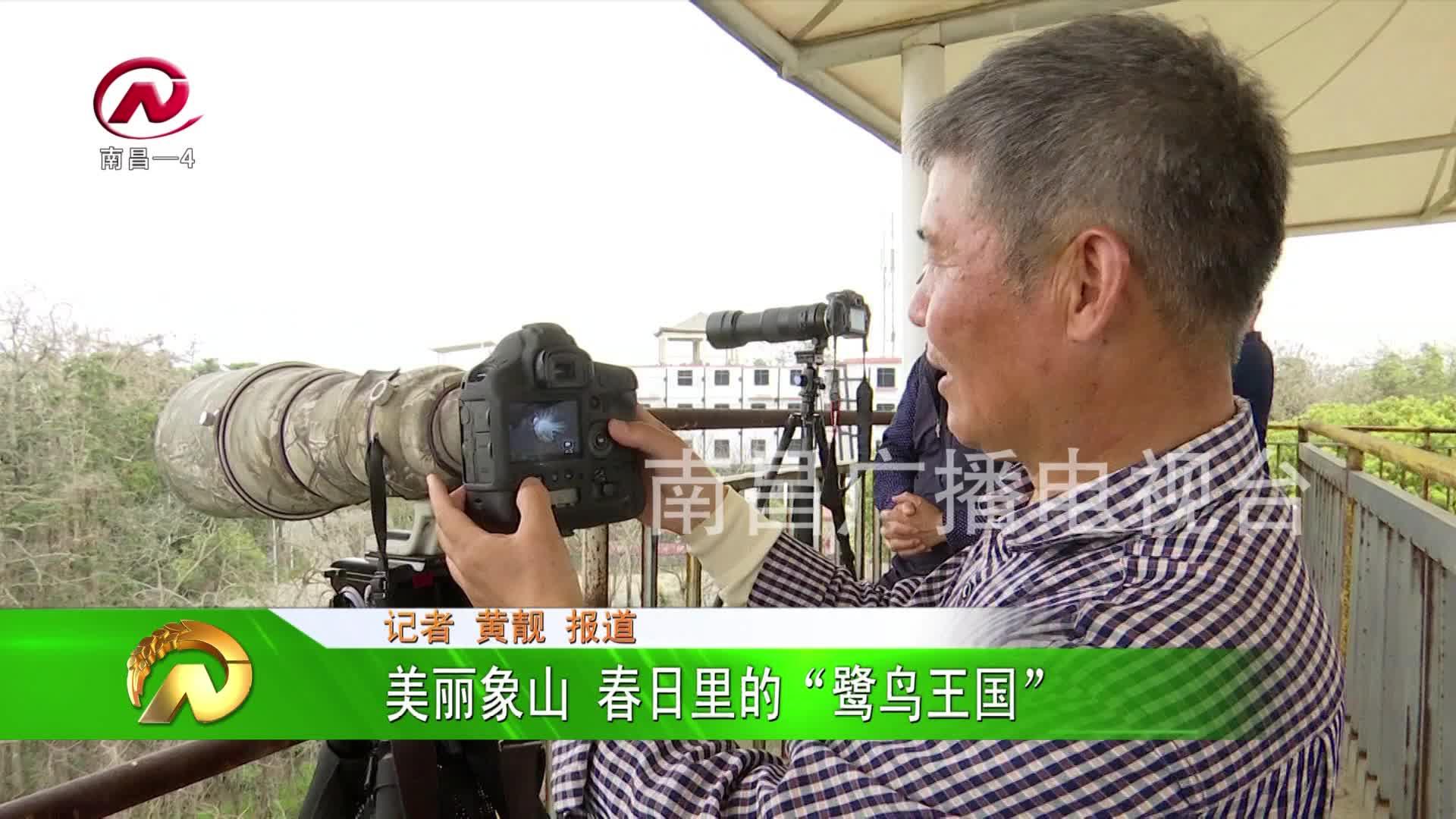 """【豫章農視】美麗象山 春日里的""""鷺鳥王國"""""""