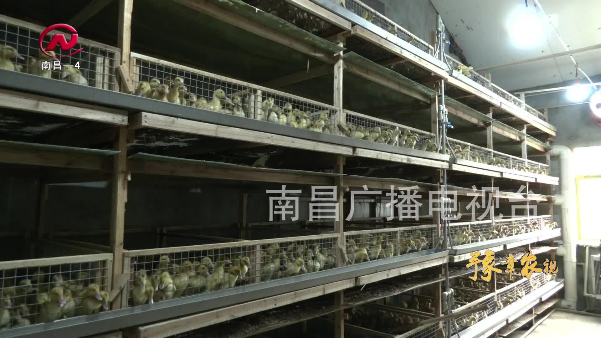 【豫章農視】培育壯大農業產業集群  實現村強民富