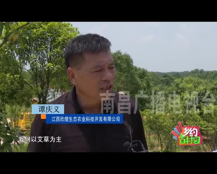 南昌林下经济逐步兴旺