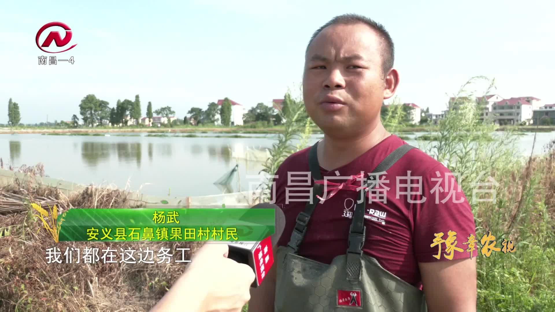 【豫章农视】特色水产养殖  激活乡村振兴一池碧水