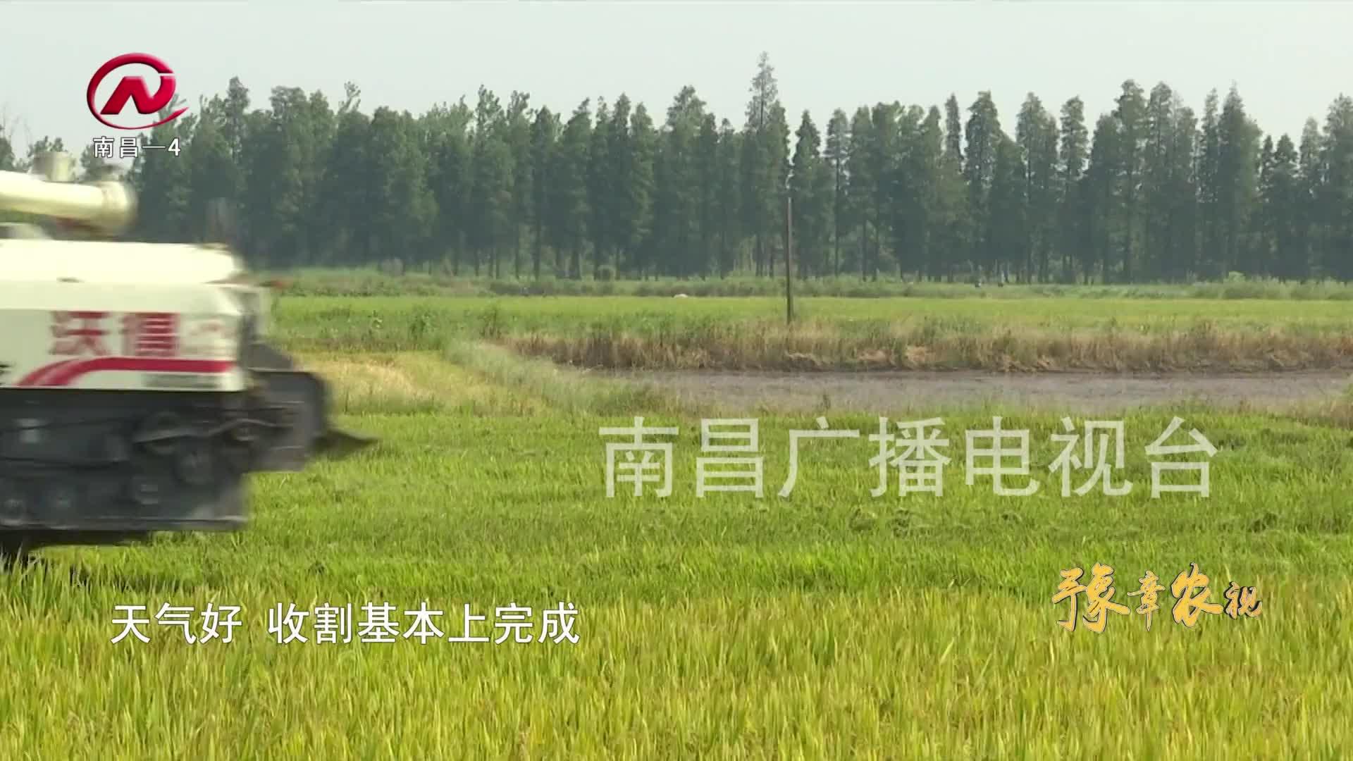 """【豫章农视】全力以赴助""""双抢"""" 确保粮食好收成"""