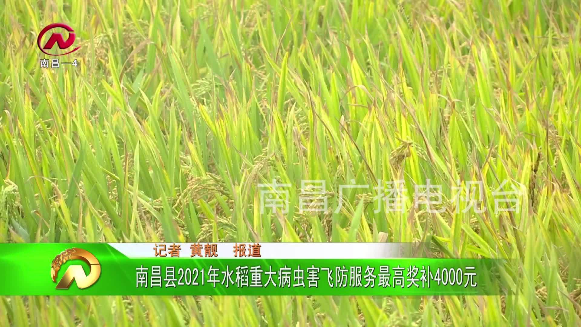 【豫章农视】南昌县2021年水稻重大病虫害飞防服务最高奖补4000元