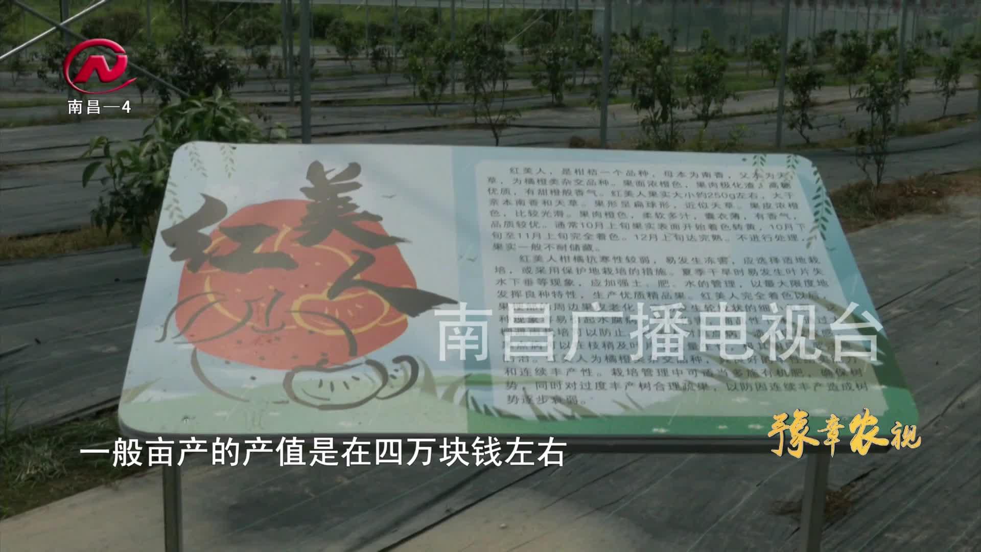 【豫章农视】四大特色产业高质量发展 助力乡村振兴(二)