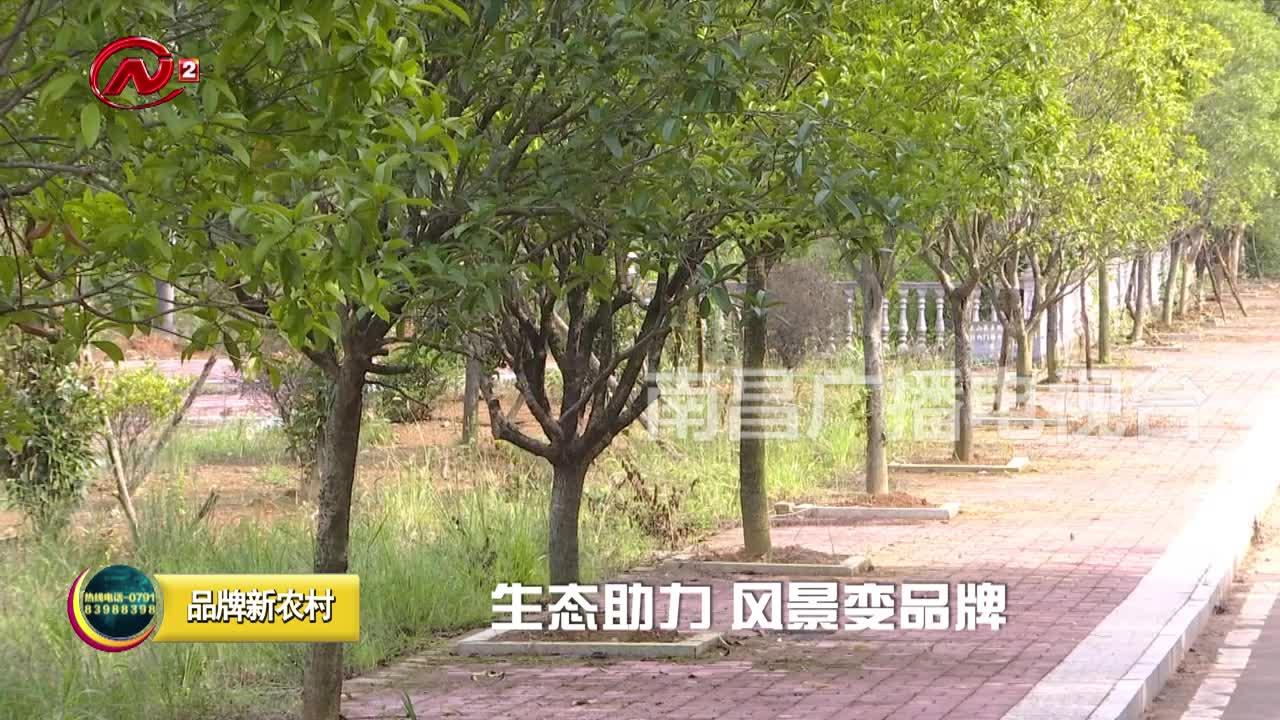 """都说变了样:西陈村飞出""""土凤凰"""" 产业振兴俏模样"""