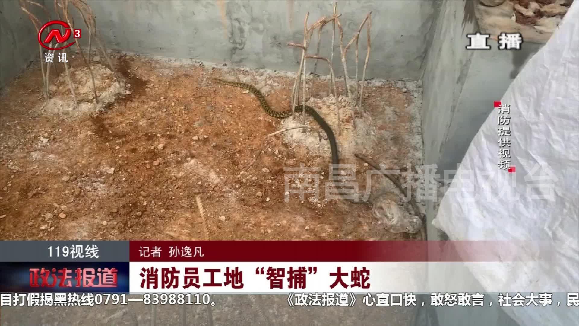 """消防员工地""""智捕""""大蛇"""